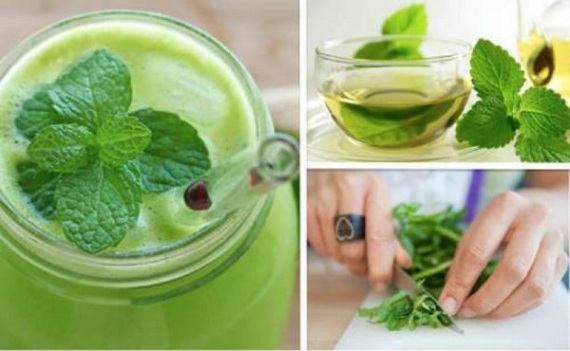 Health Benefits from Eating Fresh Mint