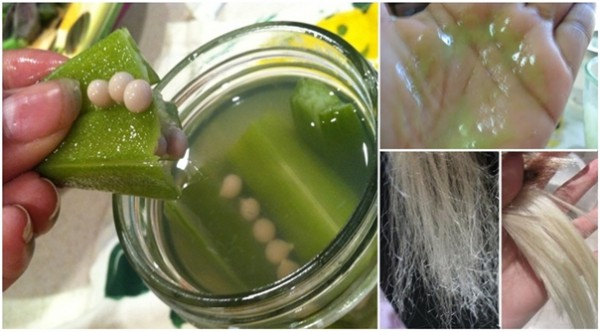 okra for healthier hair Shiny hair – okra, when used as a hair rinse, gives great shine to your hair you can give your regular conditioner a miss once in a while and take care of your hair the natural way apart from the above-mentioned benefits, okra is also good for:.