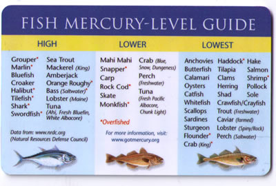 Foods to avoid when pregnant for Pregnancy fish chart