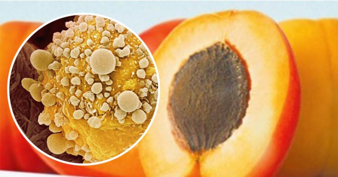 Scientist Discovers that These 2 Ingredients in Apricot Seeds Can Help Prevent Cancer