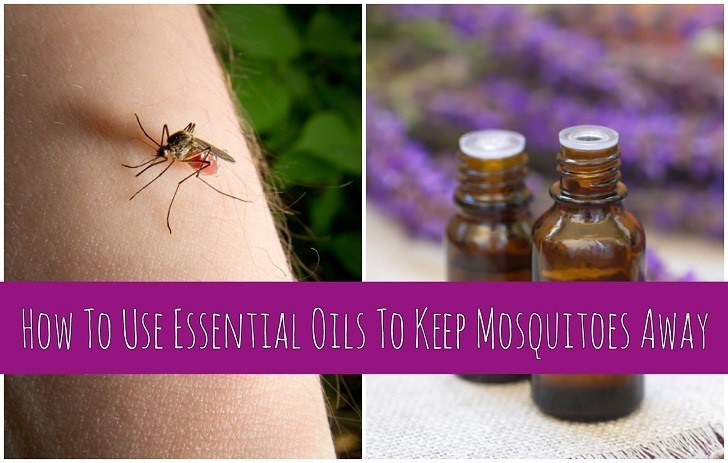 How To Use Essential Oils To Keep Mosquitoes Away