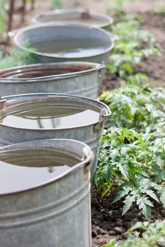 How To Save Money & Help the Earth Using a Greywater System